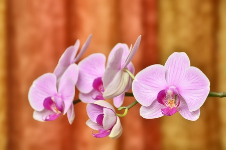 Orchid flowers branch