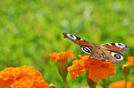 Mariposa sobre la flor
