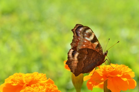 Butterfly via bloem