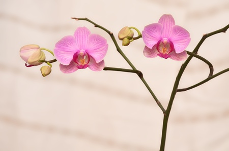 Orqu�deas Flores ramo de flores
