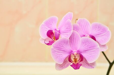 Vivid branch of orchid flowers on beige photo