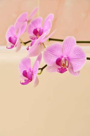 Vivid branch of orchid flowers on beige Standard-Bild
