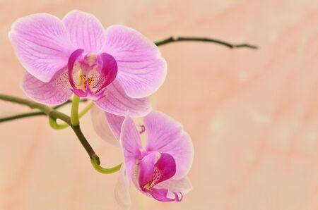 Vivid rama de flores de orquídeas en color beige