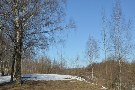 Spring foresta
