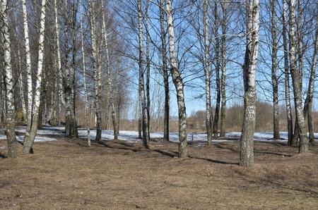 Primavera de los bosques