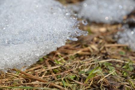 Última nieve que se derrite durante la primavera nueva hierba verde Foto de archivo