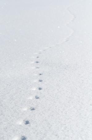 Las huellas del ratón en el campo de la nieve