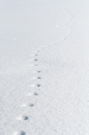 Mouse footprints on the snow field Stock Photo - 12475050