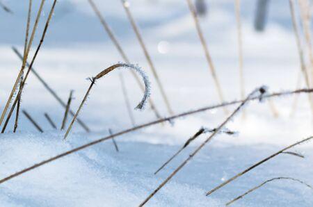 Las curvas de la hierba con las heladas