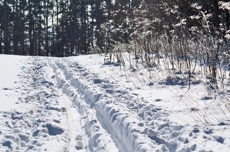 Esquí carretera cerca de la frontera del bosque Foto de archivo
