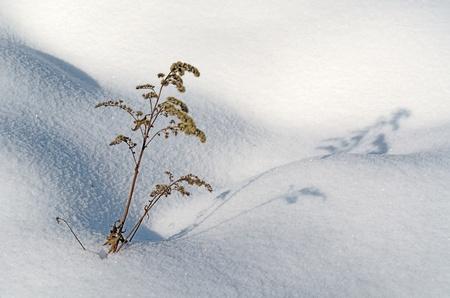 Las curvas de la nieve sobre el terreno con plantas solo