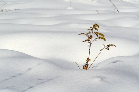 Snow field curves with alone plant photo