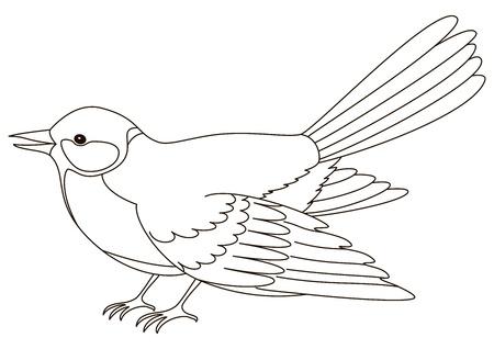 Bird a titmouse, a vector, the isolated horizontal image, contours photo