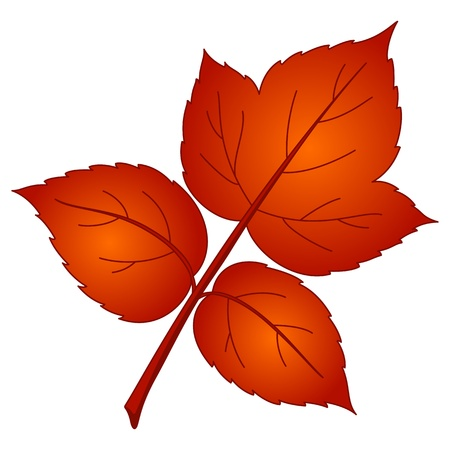 Leaf of raspberry, vector, beautiful nature object, isolated Stock Vector - 8452282