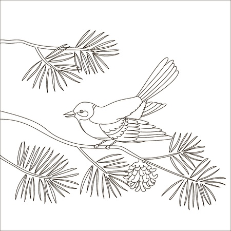 Titmouse sitting on a branch of a pine tree, isolated, contours Stock Vector - 8598697