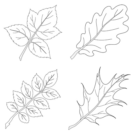 Leaves of plants, nature objects, vector, set contour: raspberry, oak, dogrose, oak iberian