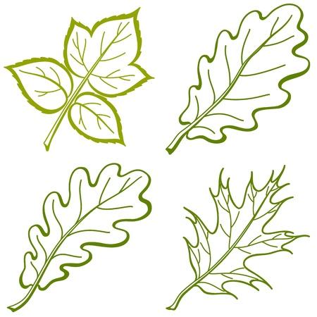 contorno: Hojas de plantas, objetos de naturaleza