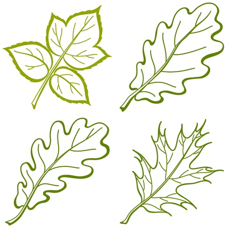 Leaves of plants, nature objects Stock Vector - 8641424