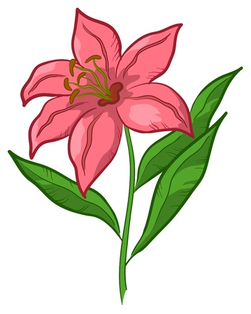 stalk: Flower lily, love symbol, floral gift, isolated