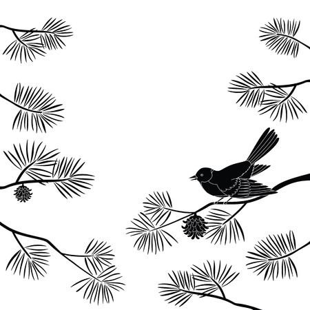 Black and white background, bird titmouse sitting on pine branch.  Vector