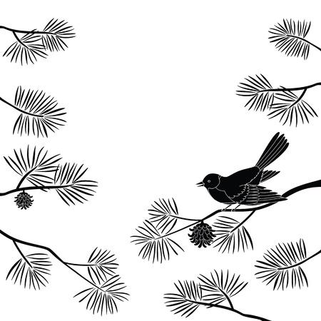 pino: Fondo blanco y negro, p�jaro mosca p�jaro posado en una rama de pino.
