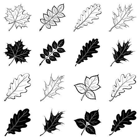 arboles de caricatura: Hojas diferentes, conjunto de pictogramas en blanco y negro - Elementos para el diseño. Vectores
