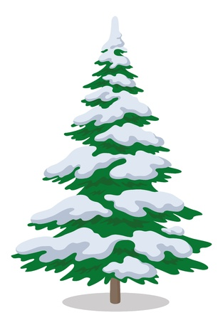 Christmas fir tree with snow, holiday winter symbol, isolated on white   Illustration