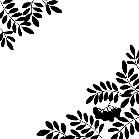 Black and white background, isolated silhouette of rowanberry branches and berries  Vector