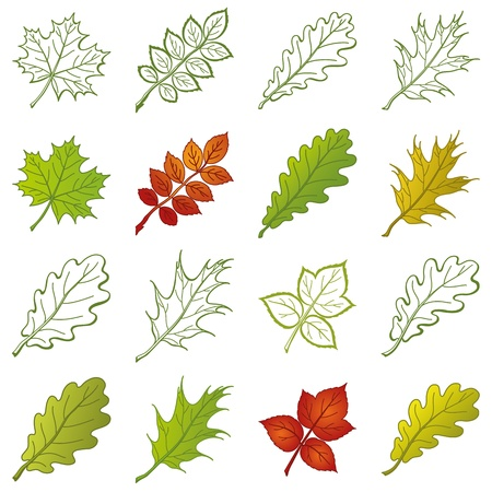 Leaves of different plants, set of nature objects and pictograms - elements for design.  Vector