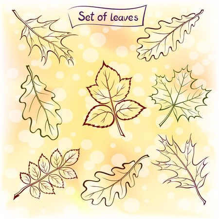 oak: Set of Pictograms Plant Leaves, Oak, Iberian Oak, Maple, Raspberry, Dogrose. Nature Yellow and Orange Autumn Background. Eps10, Contains Transparencies. Vector