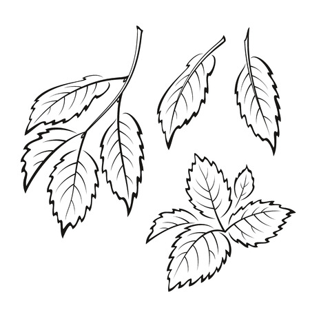 elm: Set of Plant, Elm Tree Leaves, Black on White.