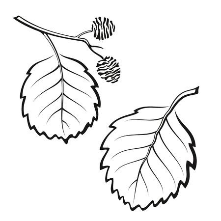 Conjunto de la planta, las hojas del árbol de aliso, Negro sobre blanco.