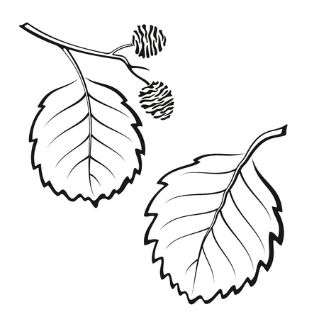 alder tree: Set of Plant, Alder Tree Leaves, Black on White.