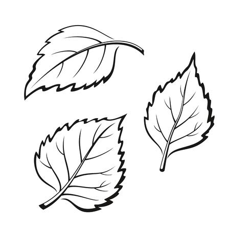 picto: Set of Plant, Birch Tree Leaves, Black on White.  Illustration