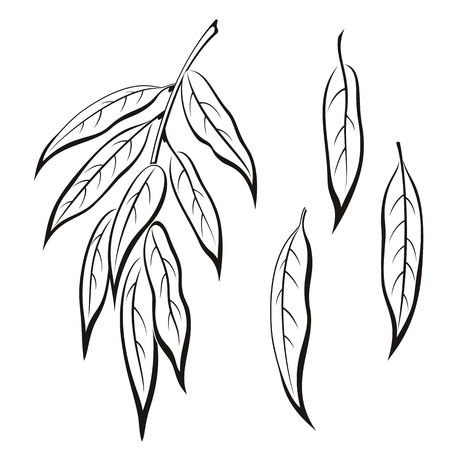 Set of Plant, Willow Tree Leaves, Black on White.