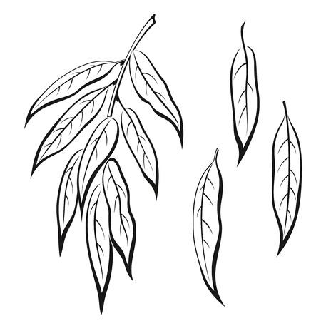 Set of Plant, Willow Tree Leaves, Black on White.  Ilustração