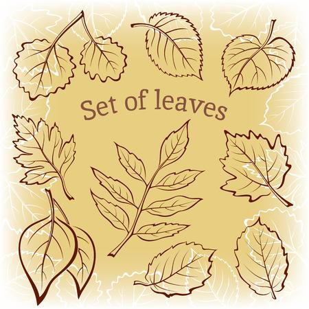 ash tree: Set of Pictograms, Plant Leaves, Hawthorn, Poplar Silver, Aspen, Hazel, Linden, Ash-tree, Poplar, Elm Karagach. Brown Background. Vector Illustration
