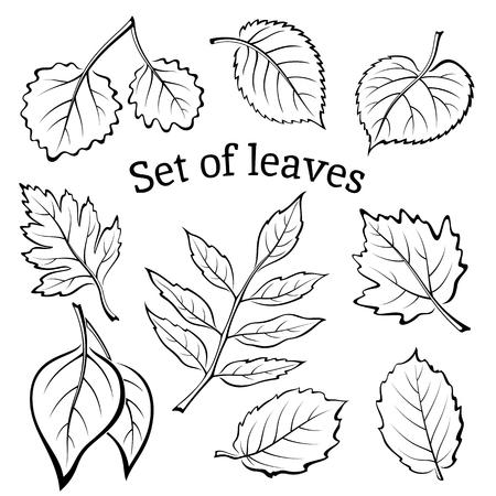 arbol alamo: Conjunto de pictogramas, hojas de la planta, espino, álamo Plata, Aspen, Hazel, Linden, Ceniza-árbol, álamo, olmo Karagach. Negro sobre fondo blanco. Vector