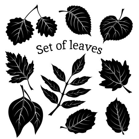 arbol alamo: Conjunto de pictogramas, hojas de la planta, espino, álamo Plata, Aspen, Hazel, Linden, Ceniza-árbol, álamo, olmo Karagach. Negro sobre fondo blanco.