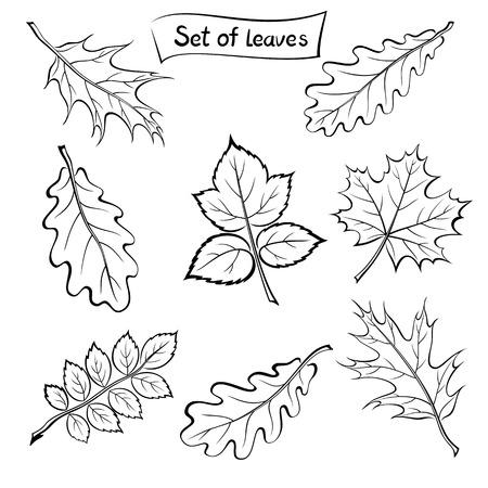 picto: Set of Pictograms, Plant Leaves, Oak, Iberian Oak, Maple, Raspberry, Dogrose. Black on White Background.