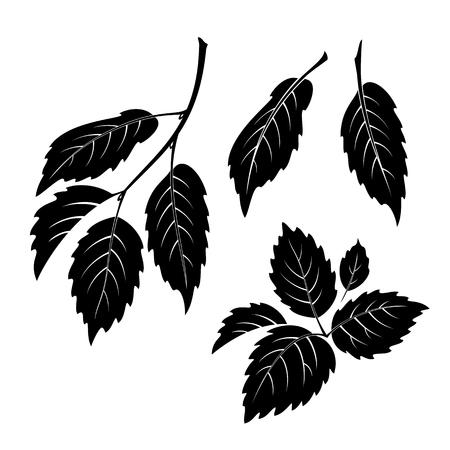 elm: Set of Plant Pictograms, Elm Tree Leaves, Black on White. Vector