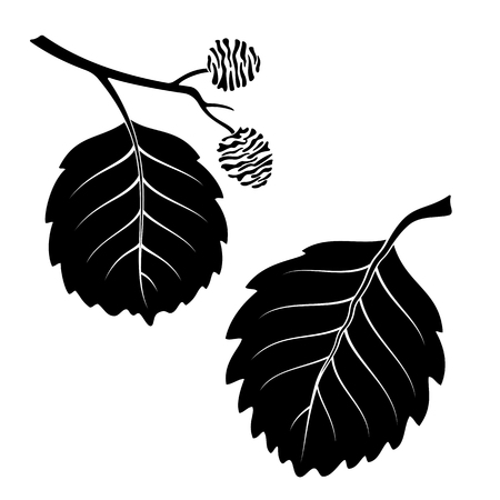 alder tree: Set of Plant Pictograms, Alder Tree Leaves, Black on White. Vector