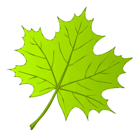 Sommer Maple Green Leaf Isoliert Natur Symbol, polygonal Low-Poly-Design. Vektor