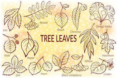 Conjunto de pictogramas naturaleza, las hojas del árbol, sauce, espino, álamo, Aspen, Ginkgo Biloba, olmo, aliso, tilo, Rowan, Castaño, Negro Aronia y Haya. Eps10, contiene las transparencias. Vector