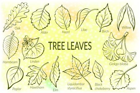 Pictogramas Conjunto, las hojas del árbol, roble, sauce, Liquidambar, espino, álamo, Aspen, Hazel, Ginkgo Biloba, olmo, abedul, aliso, tilo, carpe, Aronia y lila. Eps10, contiene las transparencias. Vector