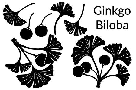 plantae: Set of Plant Pictograms, Ginkgo Biloba Tree Leaves and Fruits, Black on White. Vector Illustration