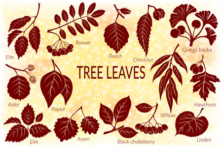 Set of Nature Pictograms, Tree Leaves, Willow, Hawthorn, Poplar, Aspen, Ginkgo Biloba, Elm, Alder, Linden, Rowan, Chestnut, Black Chokeberry and Beech. Eps10, Contains Transparencies. Vector Ilustração