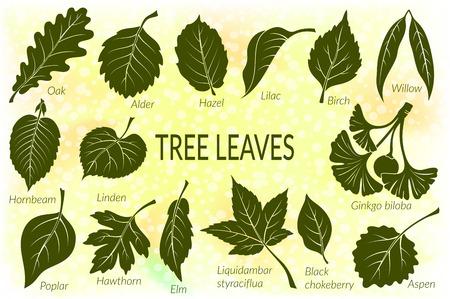 Pictograms Set, Tree Leaves, Oak, Willow, Liquidambar, Hawthorn, Poplar, Aspen, Hazel, Ginkgo Biloba, Elm, Birch, Alder, Linden, Hornbeam, Chokeberry and Lilac. Eps10, Contains Transparencies. Vector Vettoriali
