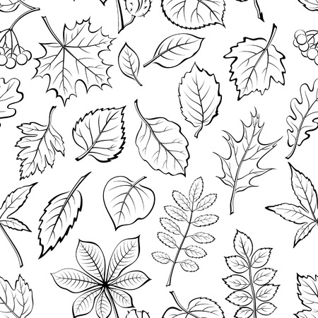 linden tree: Seamless Pictogram Tree Leaves Dogrose, Oak, Iberian Oak, Maple, Liquidambar, Hawthorn, Poplar Silver, Hazel, Elm, Birch, Linden, Rowan, Chestnut, Buckeye, Viburnum, Chokeberry, Lilac and Teak. Illustration