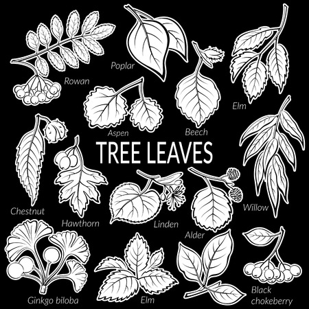alder tree: Set of Nature Pictograms, Tree Leaves, Willow, Hawthorn, Poplar, Aspen, Ginkgo Biloba, Elm, Alder, Linden, Rowan, Chestnut, Black Chokeberry and Beech. White on Black Background. Vector Stock Photo